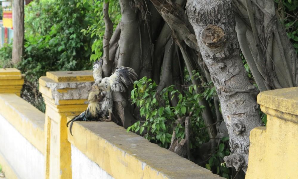 Ofrendas religiosas en el río Quibú (Foto: Geisy Guia)