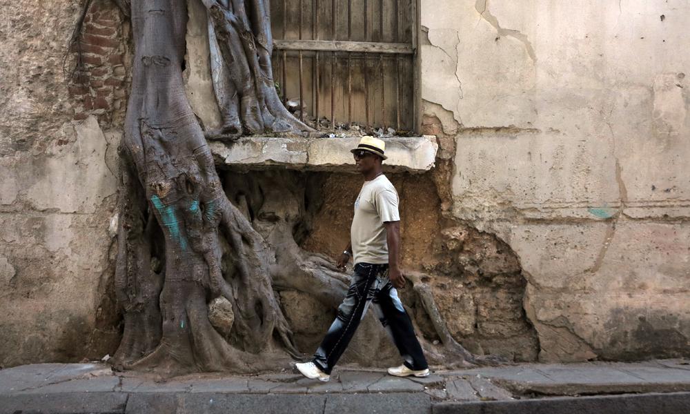 Romance entre el árbol y la piedra (Foto: Mónica Baró)